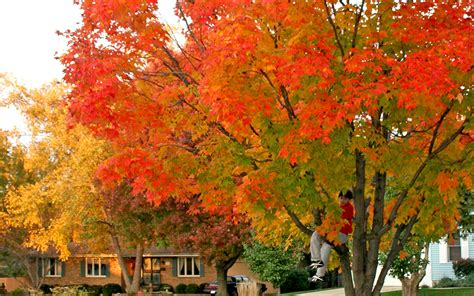 hadley ives desktops  autumn leaves