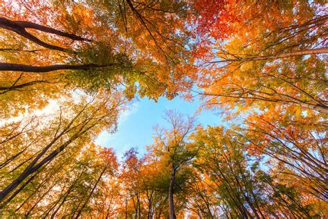 fall autumn why do leaves change color in autumn mnn