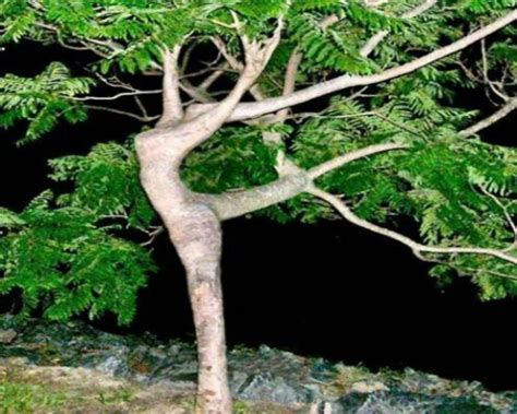 world s most amazing trees facts most amazing and creative trees