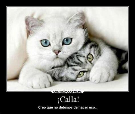 gatitos traviesos 161 calla desmotivaciones
