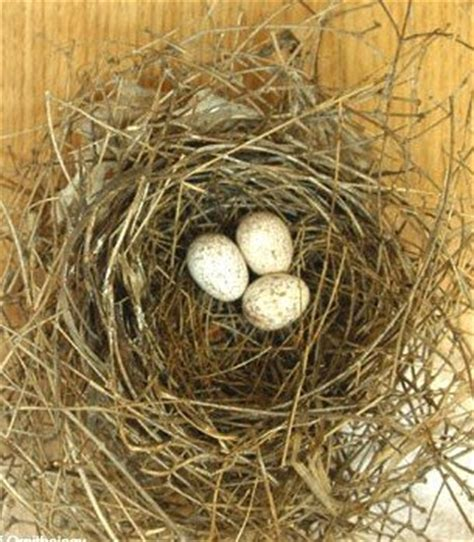 top 28 when do cardinals lay their eggs will robins and cardinals a nest ask a