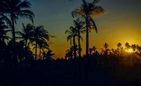 palm trees sunset wallpapers hd high quality