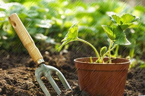 Pupuk Yang Cocok Untuk Tanah Merah cara menanam tanaman hias di dalam pot