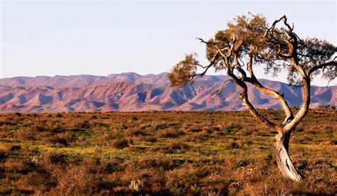 Australian Arid Lands Botanic Garden 100 Best Views In Australia 53 Flinders Ranges In Sa Australian Traveller