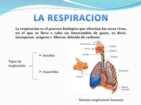 la respiracin el 8487403840 aprender a respirar no lo necesitas