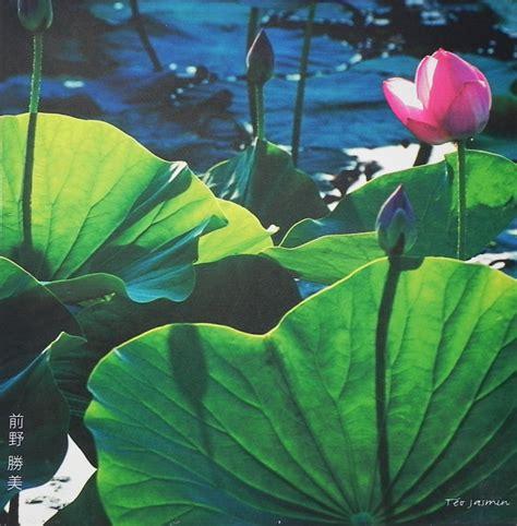 fiori di loto riccione quadro fior di loto fior di loto riccione