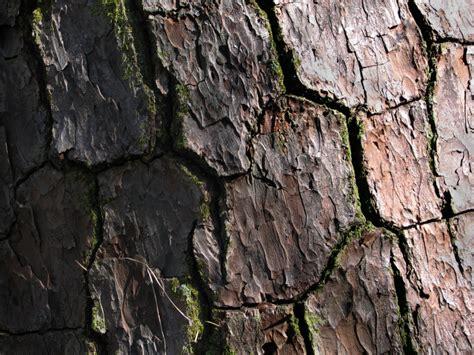 textures exles thaigodesss
