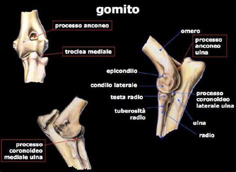 condilo femorale interno posteriore ginocchio gonfio