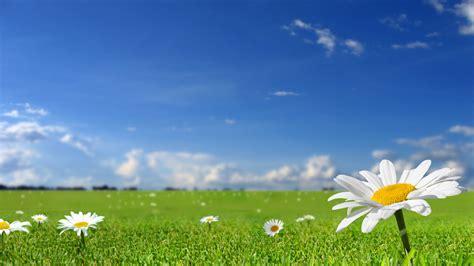 download wallpaper alam android nature wallpaper bunga bunga royalblue olivedrab