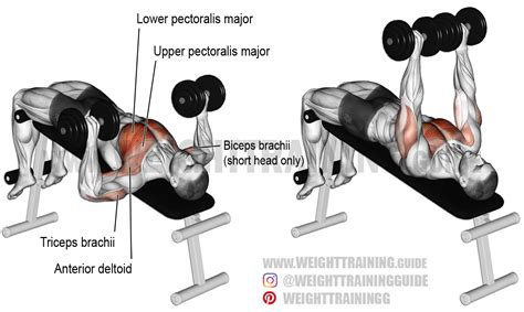 dumbbell bench press decline dumbbell bench press a compound exercise target