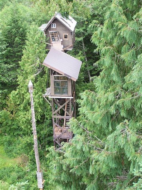 tall tree house cedar creek treehouse ashford washington treehouses pinterest treehouse