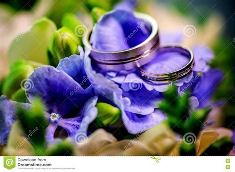 Two Golden Wedding Rings On Background Purple Flowers And