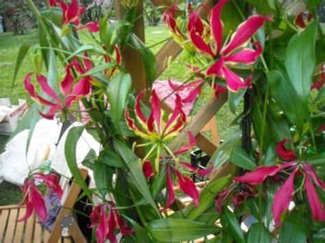 ricanti fioriti resistenti al freddo piante ricanti da giardino