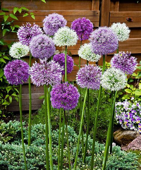 piante da cortile oltre 25 fantastiche idee su piante da balcone su