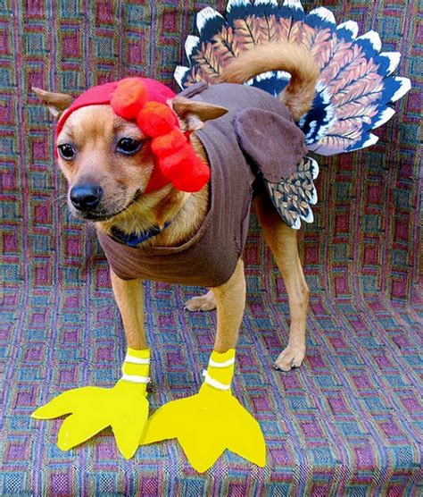 dogs and turkey here are 12 unamused cats and dogs dressed as turkeys