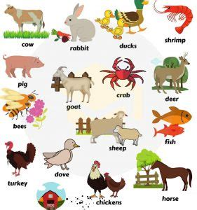 contoh soal bahasa inggris tentang binatang contoh soal