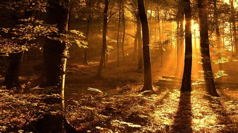 woods sunset wallpaper nature sun ray in the woods picture nr 37537