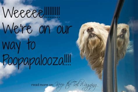 diarrhea in puppies poopapalooza investigating diarrhea in puppies 1800petmeds keep the wagging