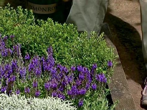 how to make an herbal knot garden how tos diy how to make an herbal knot garden how tos diy