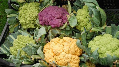 come si coltiva il sedano come si coltiva il cavolfiore i valori nutrizionali dell
