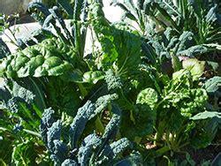 vegetable gardening in colorado colorado gardening challenge to newcomers 7 220