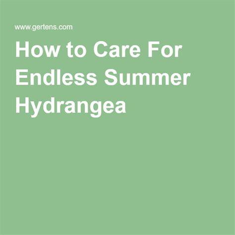 Gertens Garden Center by 25 Best Ideas About Endless Summer Hydrangea On Pinterest