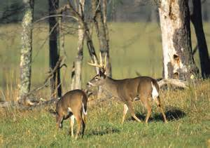 managing white tailed deer collecting data  harvested deer alabama cooperative extension