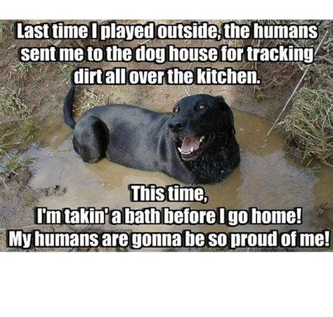 Memes About Dogs - 45 funny dog memes dogtime
