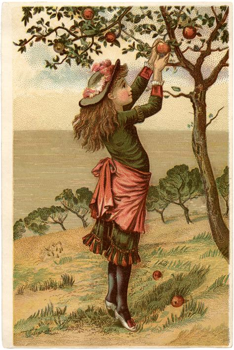 falling on tamarind trees a travelogue of books vintage apple picking image the graphics