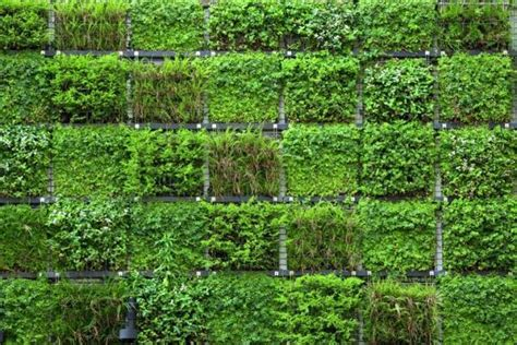 giardino verticale interno giardino verticale fai da te
