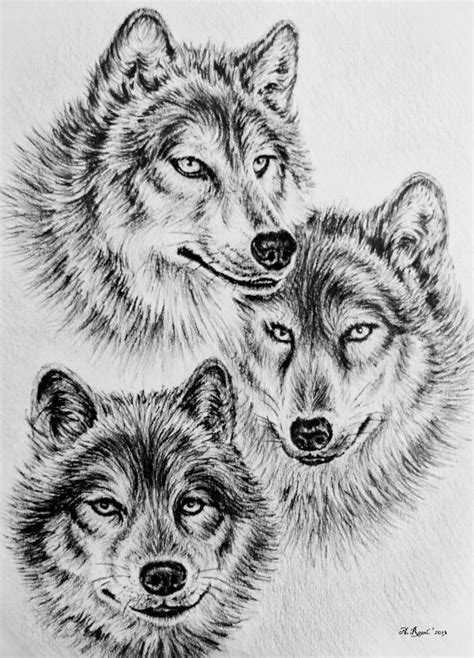 Home Design Ideas Native by Wildlife Collection Wolves Drawing By Andrew Read