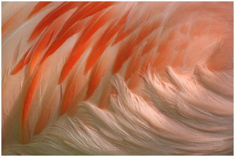 flamingo feathers wallpaper flamingo feathers by gravitylens on deviantart