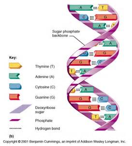 ch02 nucleic acids and atp
