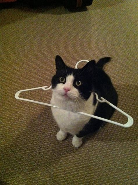 10 Funniest Cat Photos by Cats Part 57 30 Pics 10 Gifs Amazing Creatures