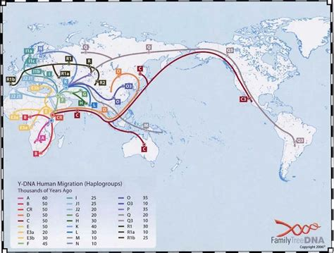 migration map out of africa retracing human evolution and migration with dna memeburn