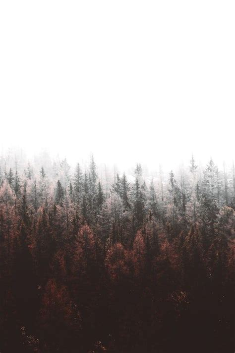 beautiful  images pictures unsplash forest