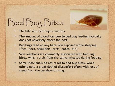 how often do bed bugs feed how often do bed bugs feed ga bed bugs