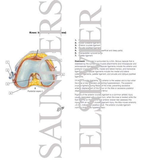 On Interior Of Knee by Interior Of Right Knee Joint Inferior Superior And