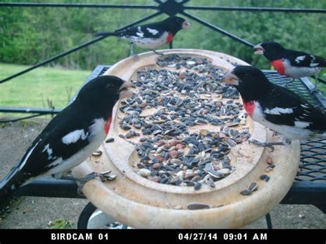 type of hawks in tn study common seeds that attract birds best birdwatching