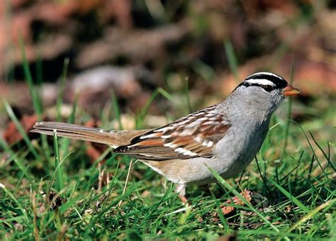 december nature news from wild birds unlimited at moana