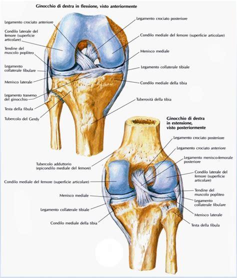 dolore interno al ginocchio trattamento per dolore al ginocchio