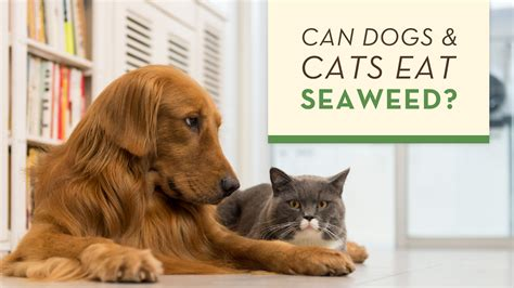 can dogs eat seaweed health feeding archives supreme source