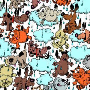 its raining cats and dogs rainingcatsanddogs e