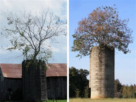 silo tree farm trees take root in abandoned silos in american farming