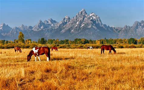 Most Beautiful Parks In The Us the most beautiful national parks in america rough guides