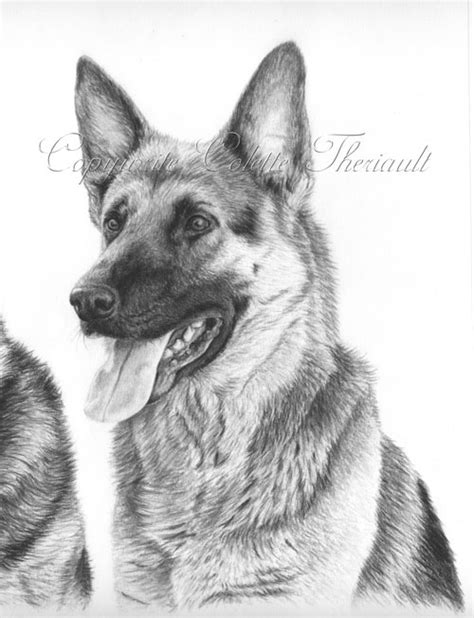german shepherd puppy drawing german shepherd rescue drawing pet portraits drawing custom graphite pencil pet