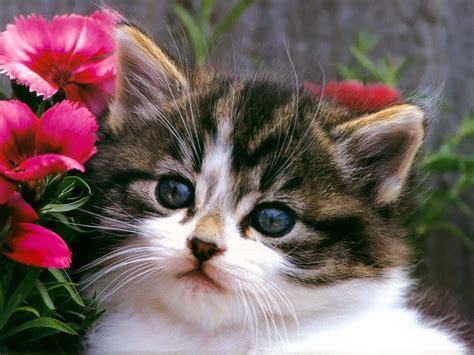 cute cat hd wallpapers    green blog