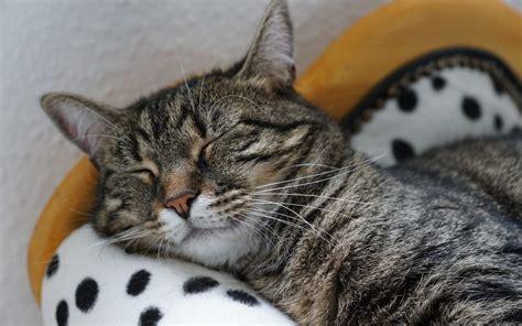stanchezza mal di testa i miei rimedi contro mal di testa disturbi sonno