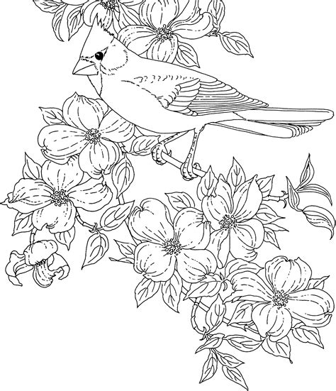 Coloring Pages Of State Birds And Flowers | flower page printable coloring sheets bird and