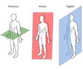 anatomische lichaamsvlakken en plaatsaanduidingen